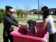 Dogs 2 Paw-fection,  Mobile Dog Washing and Grooming,  call Donna today.